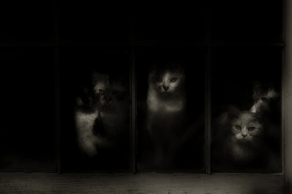 cats1_bw2