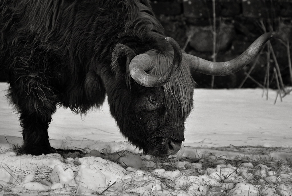 highlander3_bw