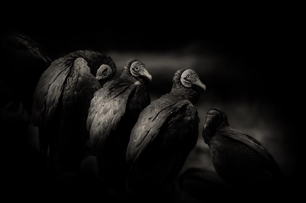 pretty_birds5