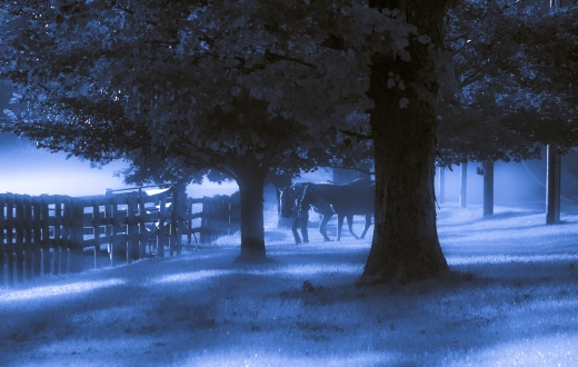 Early morning at the horse farm