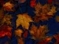 fallen_leaves2