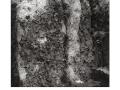 lichensframed