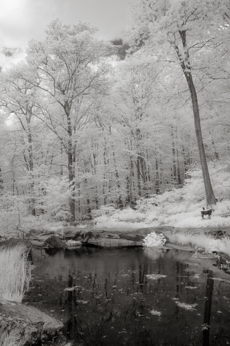 Pond-Infrared Image