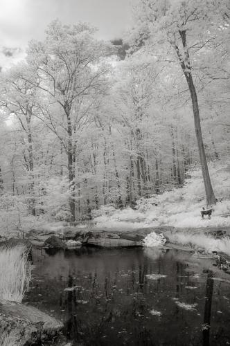 Pond-Infrared Image
