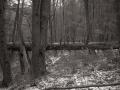 backwoods_sdim1662-2