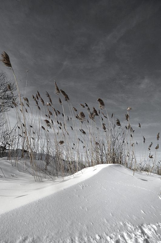 snowscape1